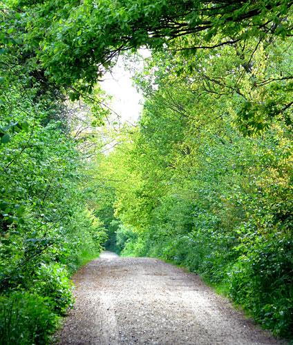 Hirtenbargweg